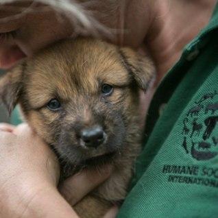 <font color=&quot;#d30008&quot;>VIDEO |</font> 149 koera ja kutsikat päästeti Korea lihafarmist veristamisest