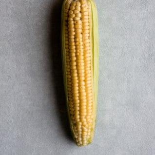 LUGEJA KÜSIB: mida teha maisitõlvikuga?