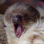 FOTOD | Londoni loomaaed tutvustas pisikest laisklooma