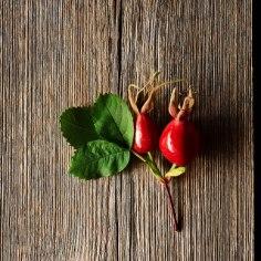Rooside ema kibuvitsa on ammu tuntud kui hurmavalt lõhnavat taluaia ilutaime. Rahvameditsiinis on vitamiinirikkaid marju kasutatud talvel organismi turgutamiseks. Samuti on kibuvitsa omadused hinnatud looduskosmeetikas.