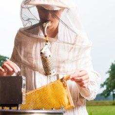 Igasugune mesi on kindlasti tervislikum kui suhkur. Kuidas mett hoida ja veel suupärasemaks muuta, õpetavad mahemesinikud Aili ja Tõnis Taal.