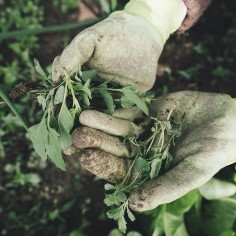 Kui ees on tõsisem küürimistöö või lillede ümberistutamine, vajavad küünealused hiljem hoolikat puhastamist ning tihkema mustuse korral ei pruugi need puhtaks minnagi. Siin on trikk, kuidas seda juba eos vältida.