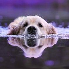 Suve naudivad ka lemmikud, kuid nagu inimesigi võivad nii vee ääres kui aias varitseda ohud. Mida täpselt silmas pidada annab nõu PetCity Rannamõisa konsultant Inna Lepihov.