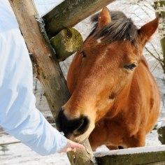 Šveitslased himustavad hobuseid seksuaalselt aina enam
