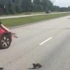 <font color=&quot;#d30008&quot;>LUSTLIK VIDEO  </font> Genka peatas maanteel auto, et loomakesed üle tee aidata