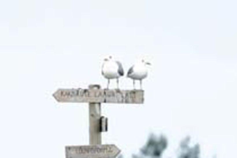 Osmussaare kivid ja linnud