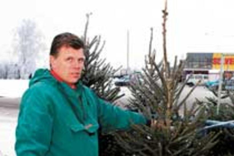 Jõulupuu – kuusk või nulg