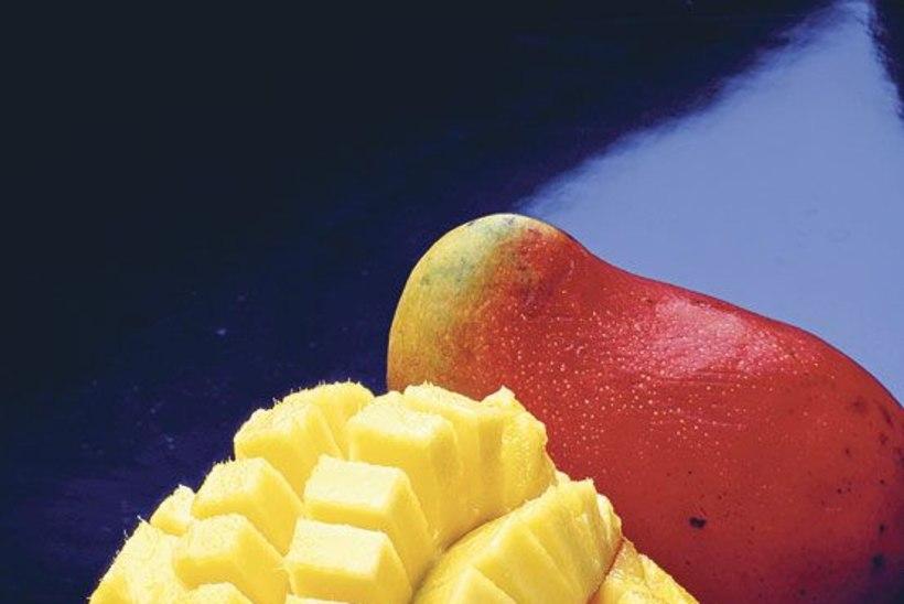 Mango: puuviljade kuningas