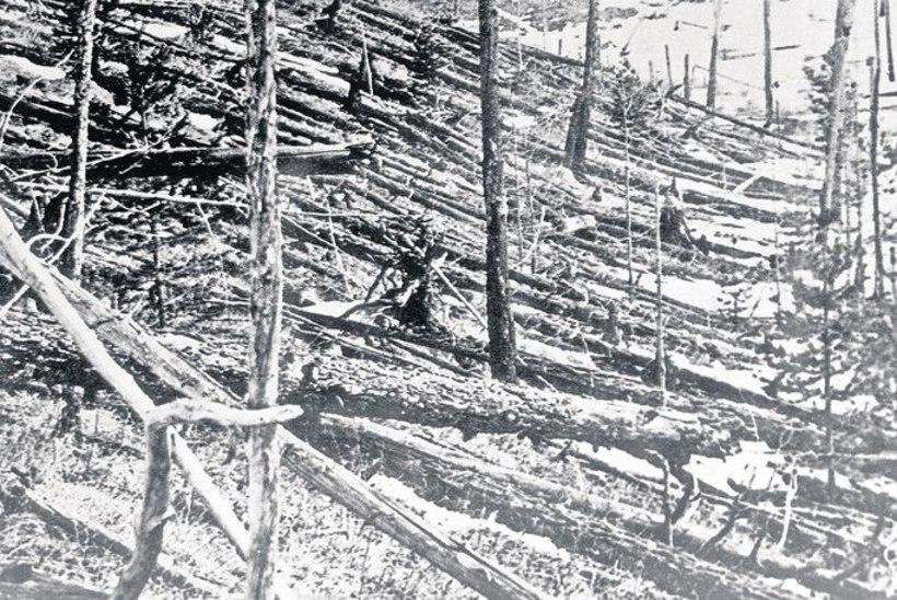 Saladuslik tulekera hävitas 60 miljonit puud