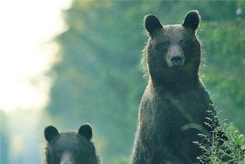 Karu ei mahtunud kaamerasse ehk Looduspiltniku ohtlik elu