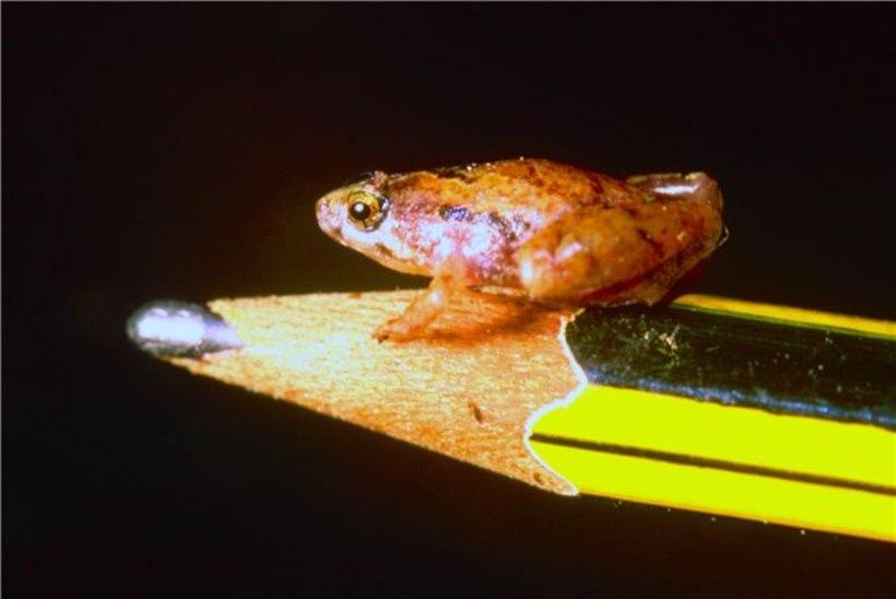 PILTUUDIS: Borneol avastati hernetera-suurune minikonn!