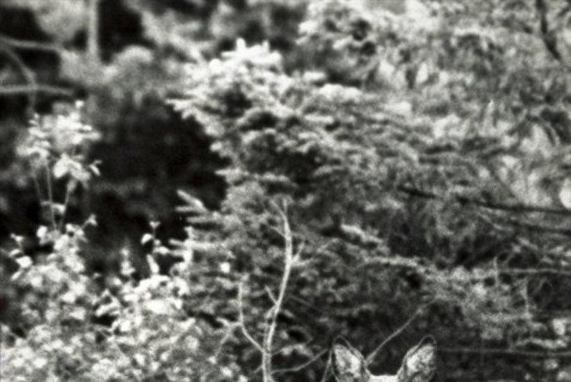 Tähelepanelikkus aitas päästa metskitsetalle