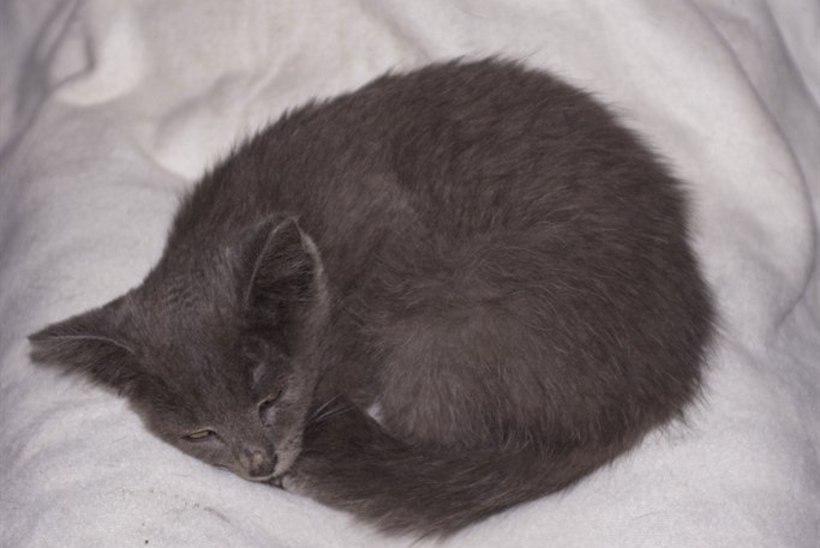 Anni Arro leidis autoparklast õnnetu hüljatud kassipoja