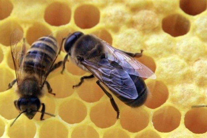 Mesilaste nõelamise tagajärjel sureb Eestis igal aastal paar inimest