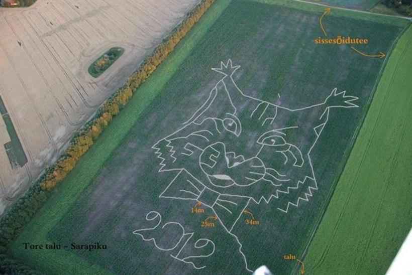 Põltsamaa pereema tegi oma unistuse teoks: Eesti esimene maisipõllulabürint