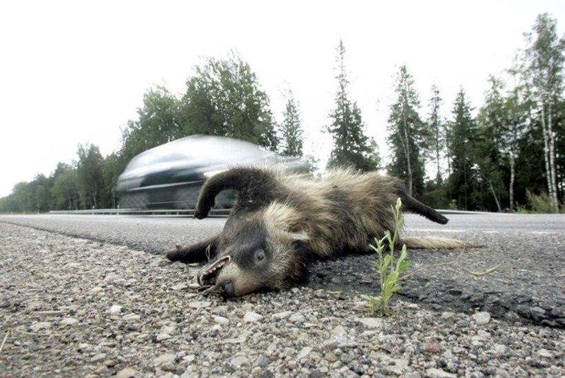 Eesti maanteed – kährikute tapalava