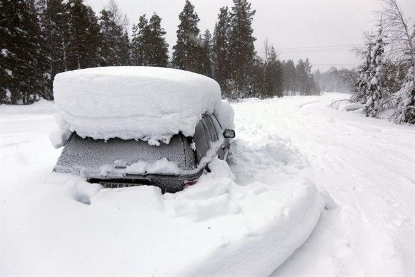 Rootslane soovis karu kombel talveunne jääda