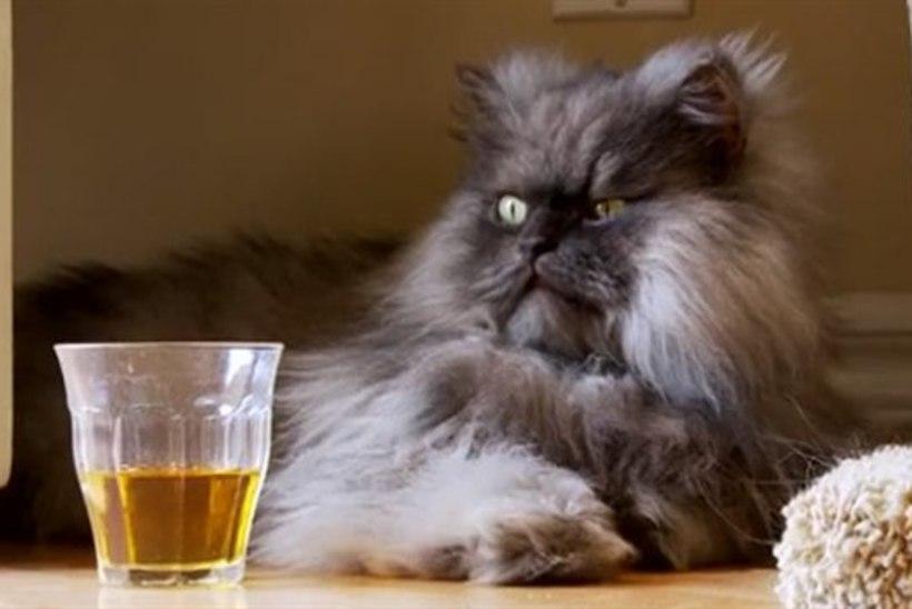 Maailma kõige karvasemaks kassiks valiti mossis Kolonel Mjau