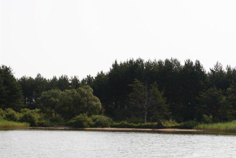 Õnne Pillak: Ülemiste järveäärne peab olema huvilistele avatud!