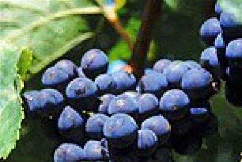 Argentina veinid