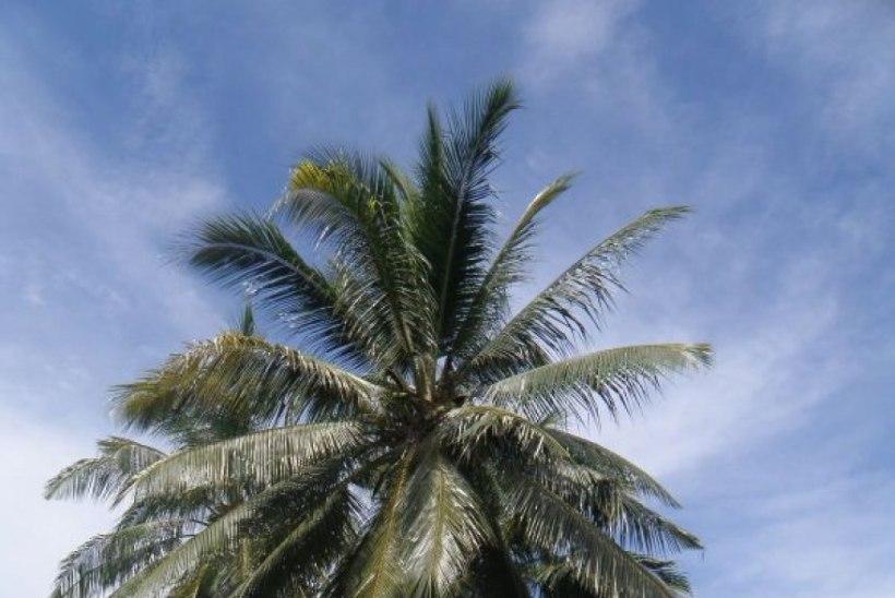 Ümbermaailmareis: Borneo saar