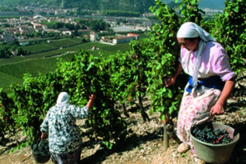 Friuli - viinamarjakarnevali maa