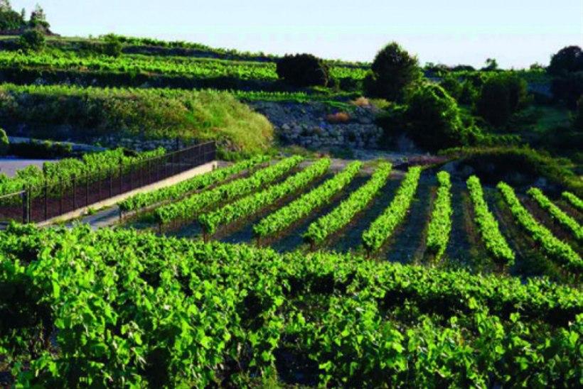 Ribera del Dueros valmivad Hispaania veinihitid