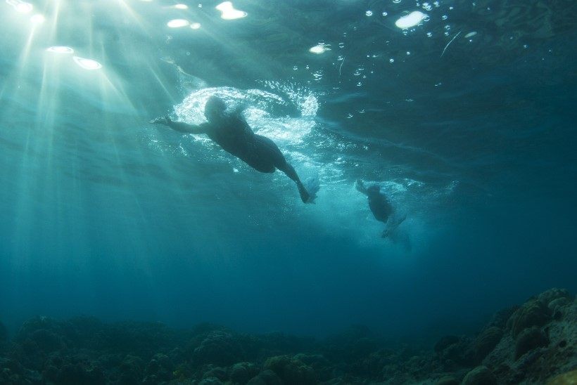 FOTOD: Triatleedid või haid?