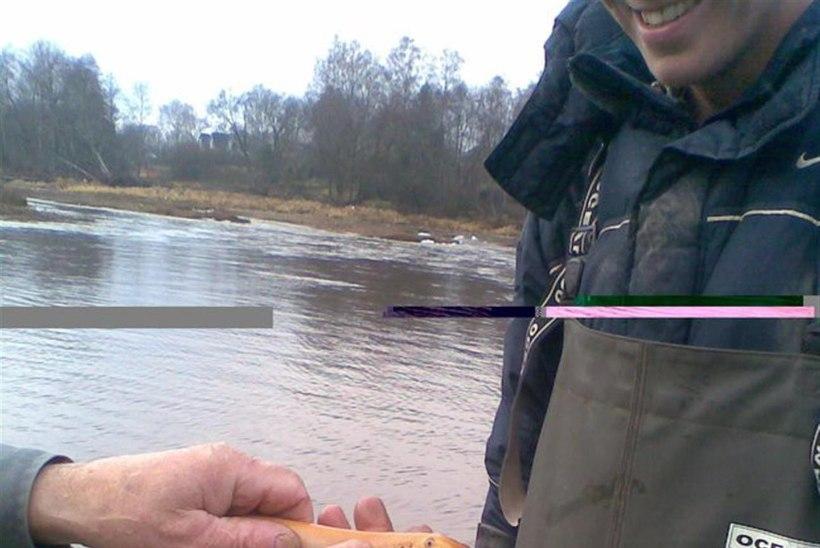 Kalur püüdis Pärnu jõest albiinosilmu