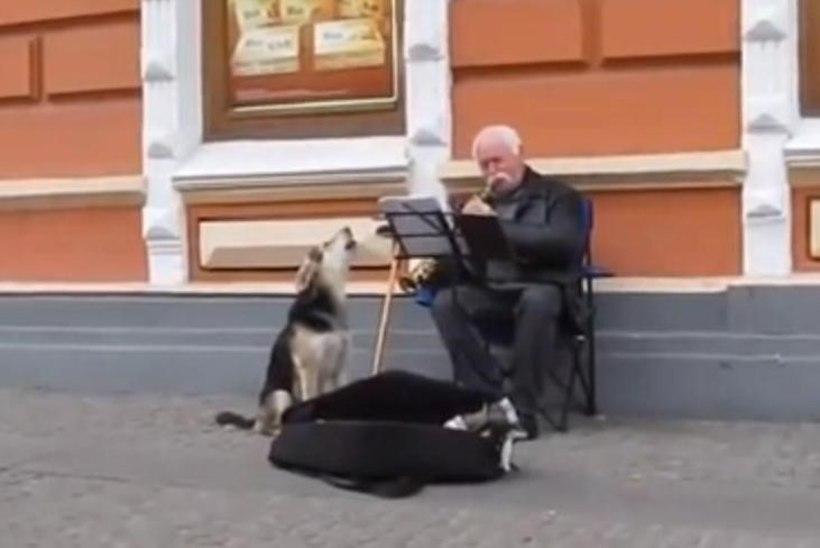 VIDEO: Hulkuv koer läks tänavamuusikule appi raha teenima