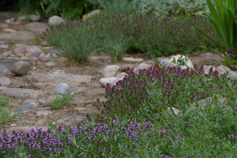 Taimed tuppa tali tuleb | Nõuanded ja sisse-väljatoomise kuldreeglid