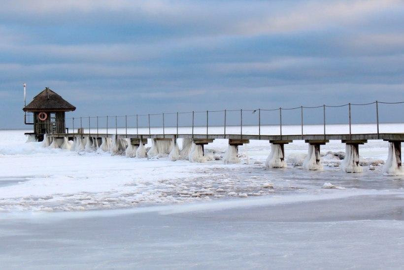 PILDID: pakase meisterdamisi Saaremaal
