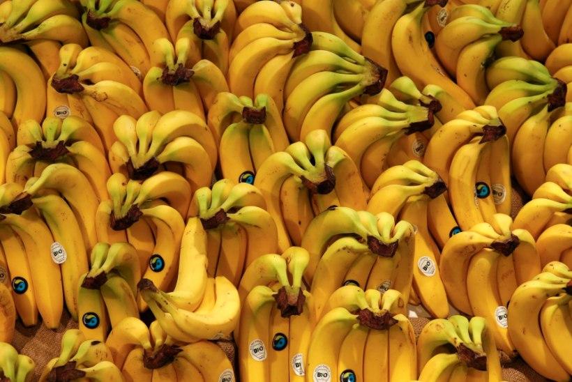ba7f0e7b9c7 Smuutisse edaspidi üks vili vähem? Banaani kilohind kerkis viiendiku võrra!