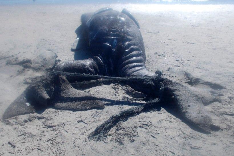PILTUUDIS: Mehhikos leiti kokkukasvanud vaalapojad