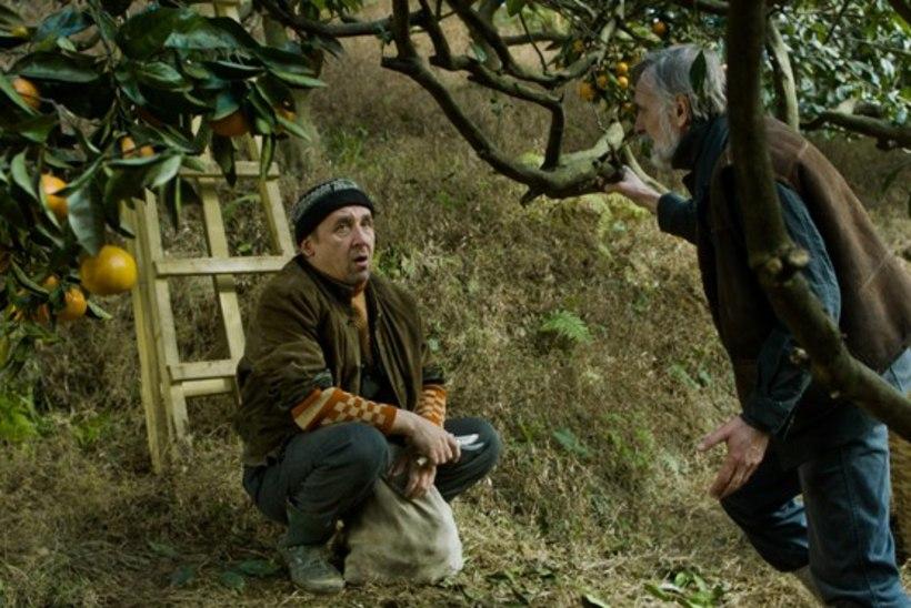 """Filmiauhinna Neitsi Maali võitis """"Mandariinid"""""""