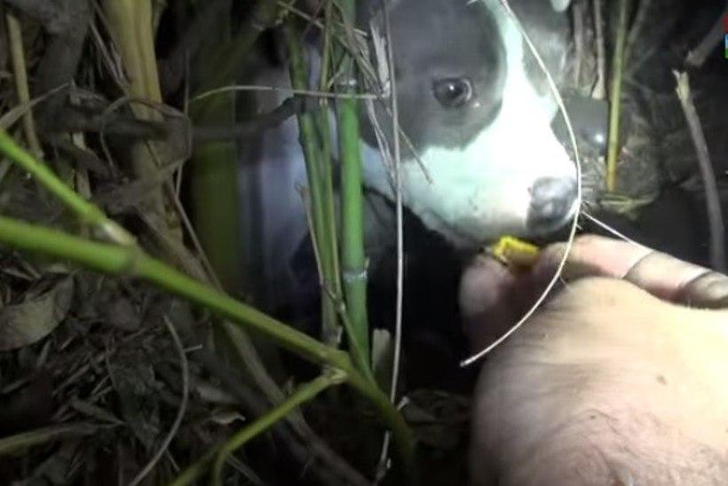 SÜDAMLIK PÄÄSTEOPERATSIOON: põõsastest viga saanud koera päästnuid ootas ees imearmas üllatus