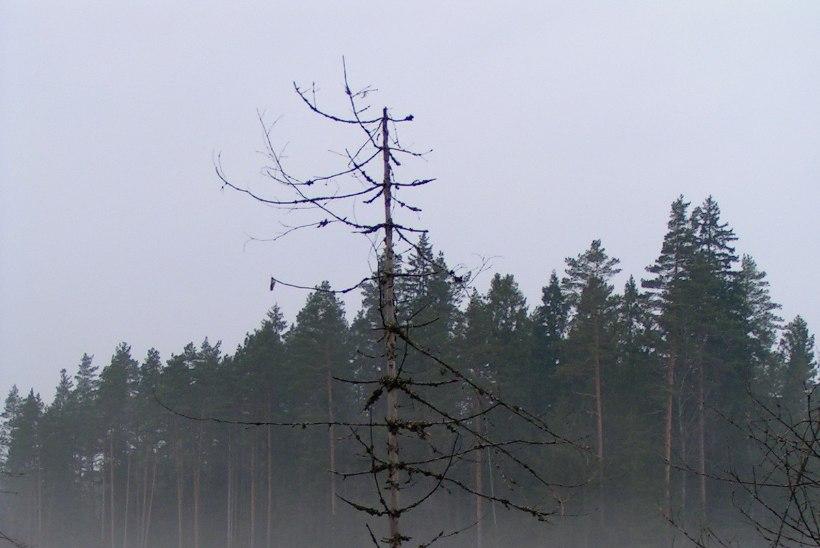 Avasta Eestimaad: kust leida parim sügisene saunaelamus?