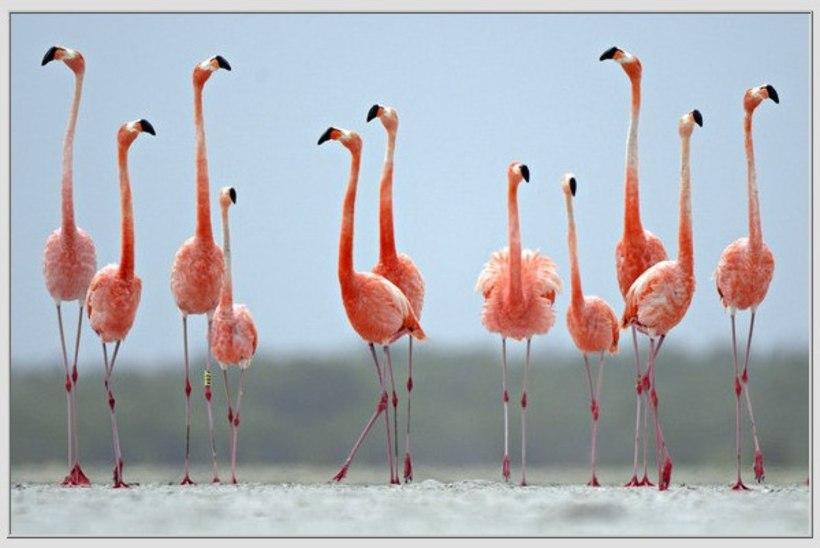 IMELINE VAATEPILT: flamingod moodustasid kujundi, mis meenutab südant