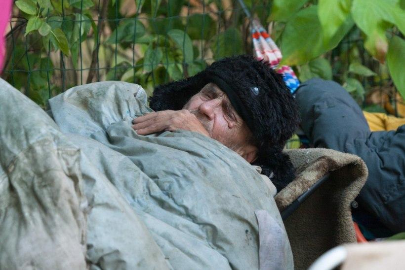Annelinna kodutu: pigem elan maja prügikastide kõrval, kui lähen varjupaika!