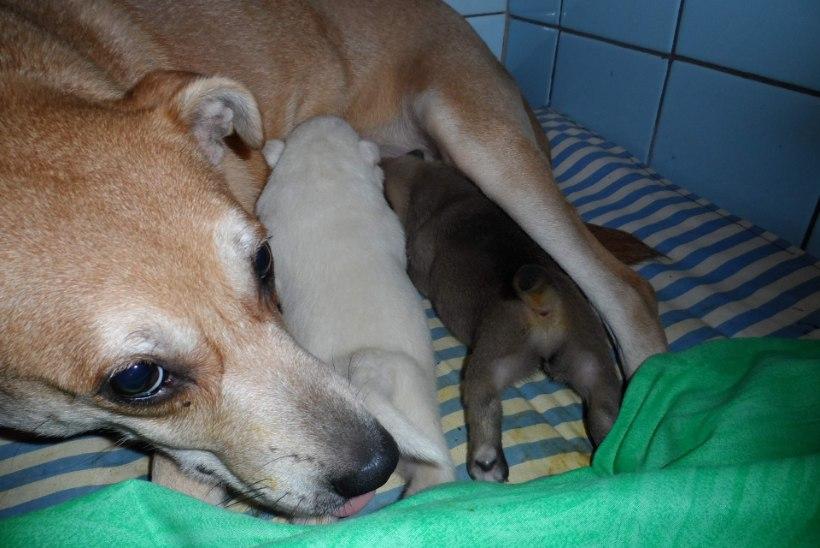 Õle tänavalt päästetud koeri on nüüd juba kuusteist