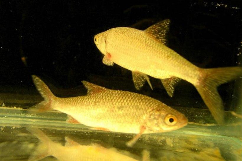 Stressist kalade elus
