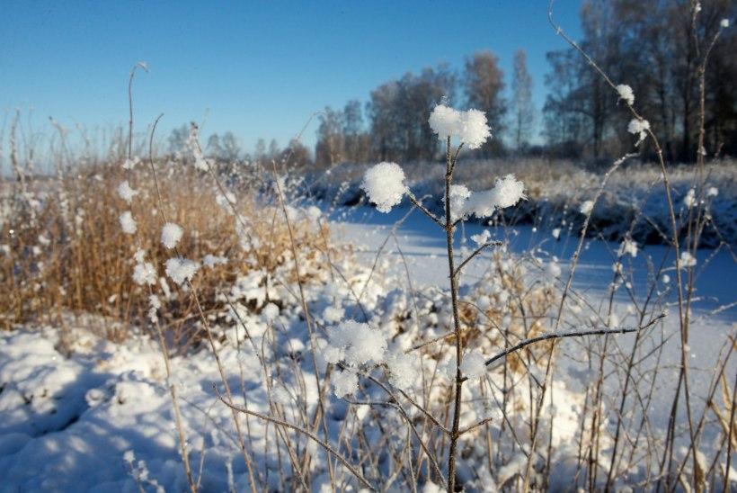 November tuleb keskmisest soojem, lund on oodata kuu lõpus