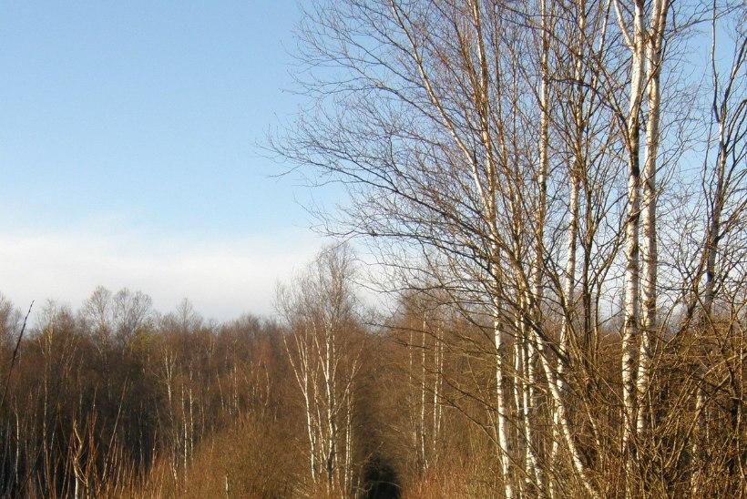 Avasta Eestimaad: tõe ja õiguse otsinguil, kuid mitte tavapäraselt