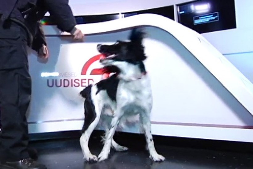TV3 VIDEO: TV3-le tehti uudistesaate ajal pommiähvardus
