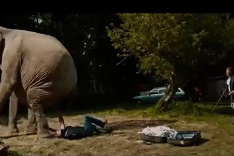 """Loomakaitsjad kutsuvad loomasõpru boikoteerima filmi """"Saja-aastane, kes ronis aknast välja ja kadus"""" piinatud elevandi pärast"""