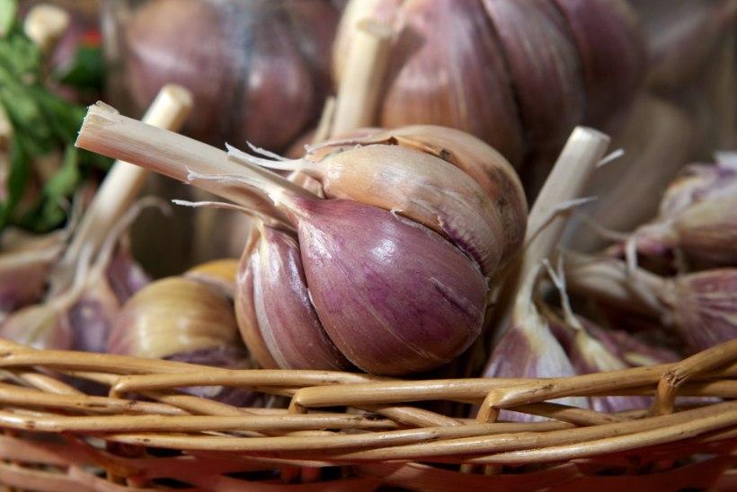 Küüslauk - tõhusam paljudest antibiootikumidest