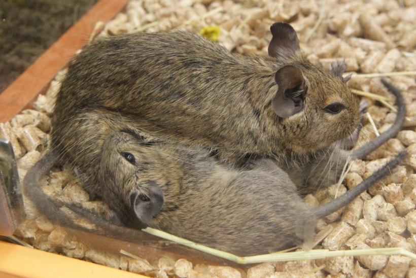 58  Pet Centeri pisilooma võttis enda hoolde Eesti Loomakaitse Selts