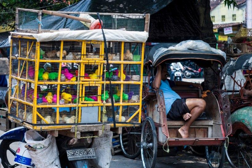 Indoneesia blogi: mida head ja võigast pakutakse turul?