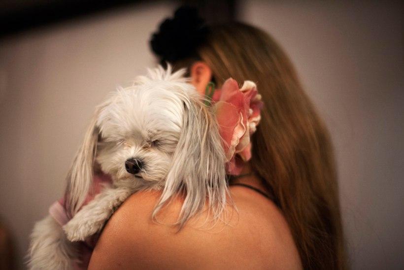 MEESTES PETTUNUD: naine abiellus 200 külalise ees koeraga
