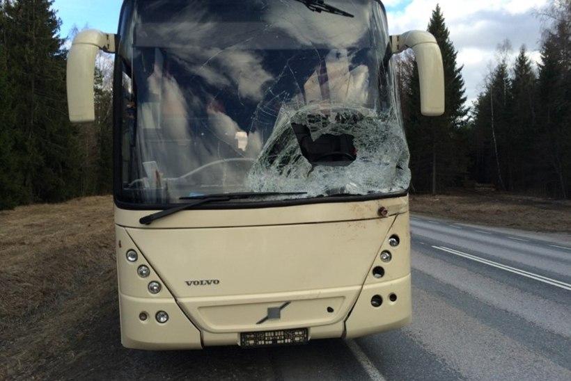 Bussijuht: põder korra vilksatas, surusin piduri põhja, järgmisel hetkel oli hiigelsuur loom esiklaasis!